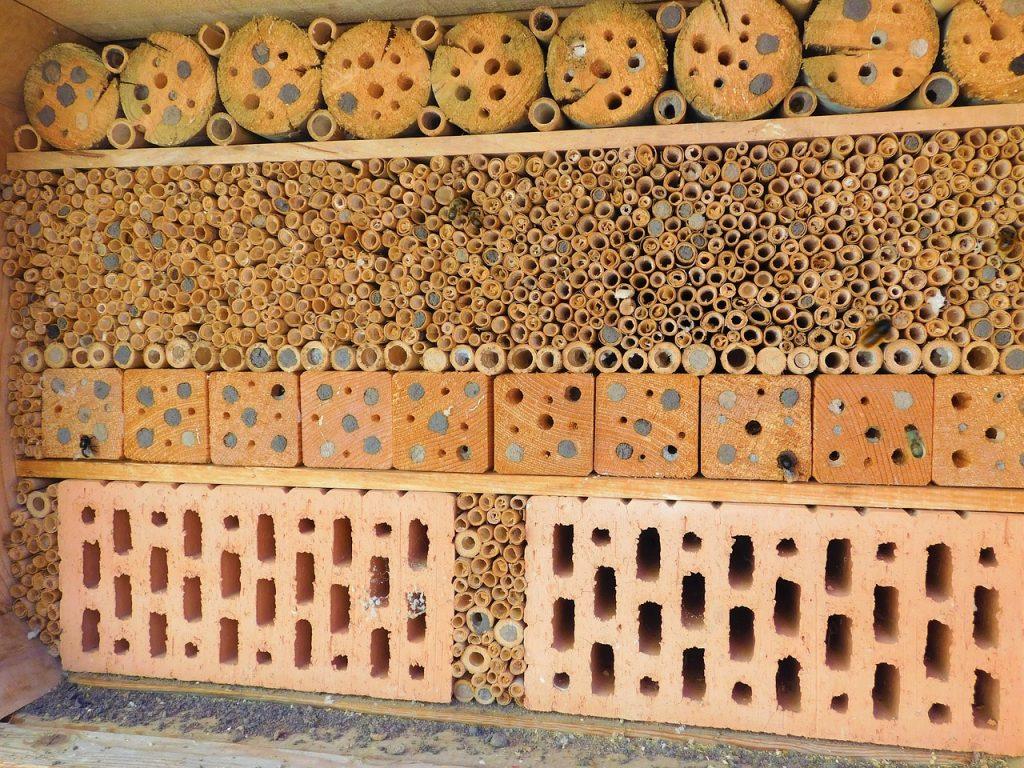 Pourquoi construire un hôtel à insectes
