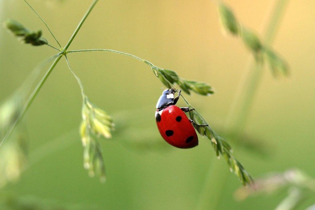 Insectes utiles au jardin