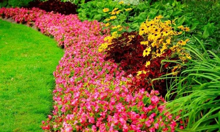 Prendre soin de son parterre de fleurs
