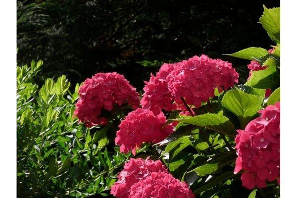 entretenir son jardin sans se casser le dos