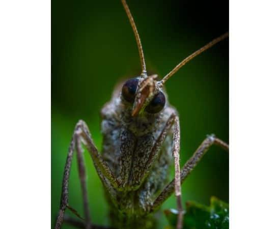 Eliminer les insectes