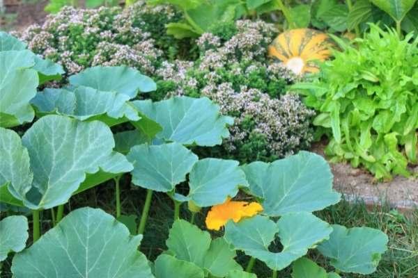 Comment-créer-un-jardin-en-permaculture