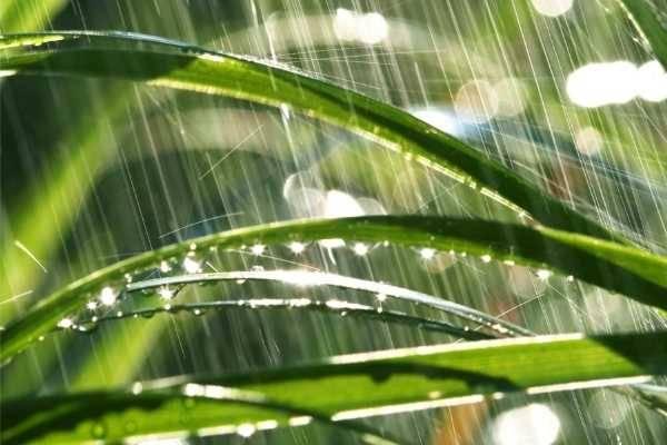 les-avantages-dun-recuperateur-deau-de-pluie